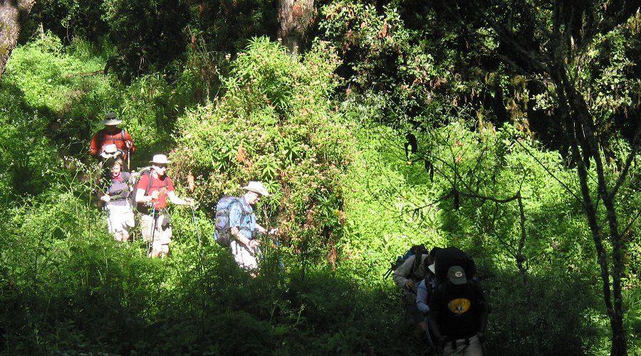 Kilimanjaro Park Forest