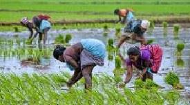 Tamil Nadu Women in Agriculture