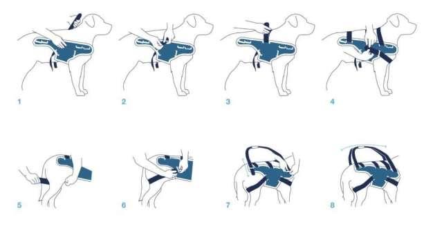 lift-instruções do corpo