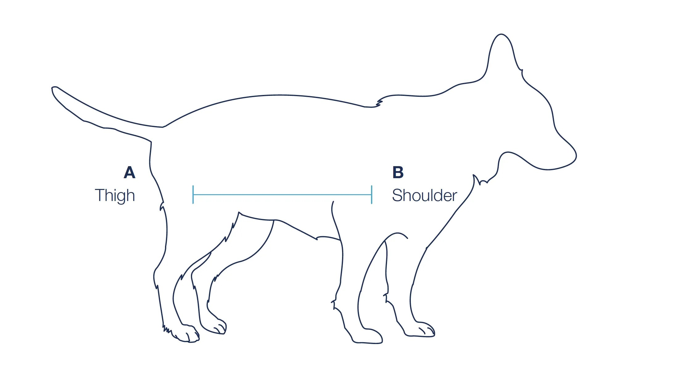 Complete Body Lift Brace For Dogs