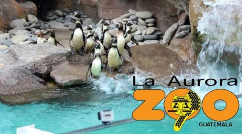 pinguinos del zoológico la aurora en Guatemala, es una balla publicitaria