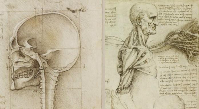 disegni anatomia leonardo da vinci