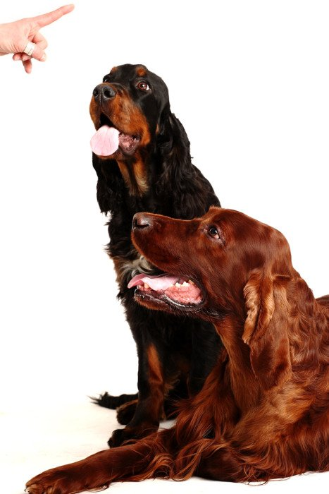 Cose che fate che il vostro cane non ama: tante regole, nessuna eccezione