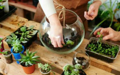 Il Terrarium è Un Mini Giardino In Vaso Consigli Per