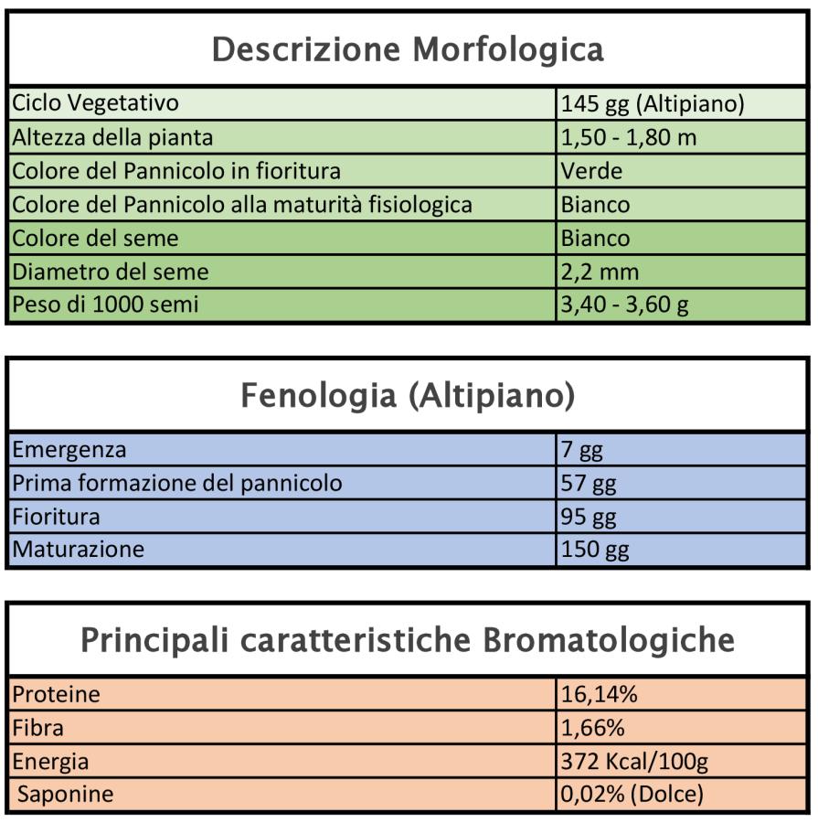 Caratteristiche varietali Quinoa varietà INIA ILLPA