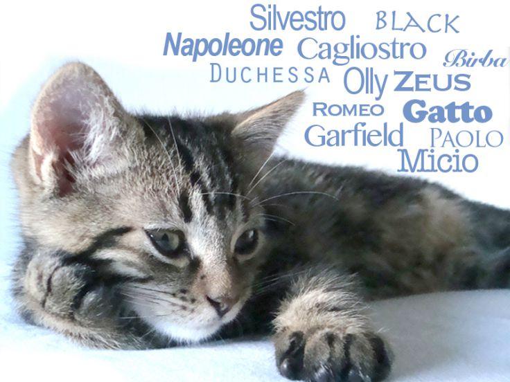 Non Sai Che Nome Dare Al Gattoelenco Di Nomi Da Gatto
