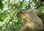 Nella giungla vietnamita Geo Rai3