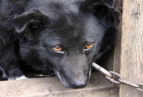 Cani catena caso smuove animi
