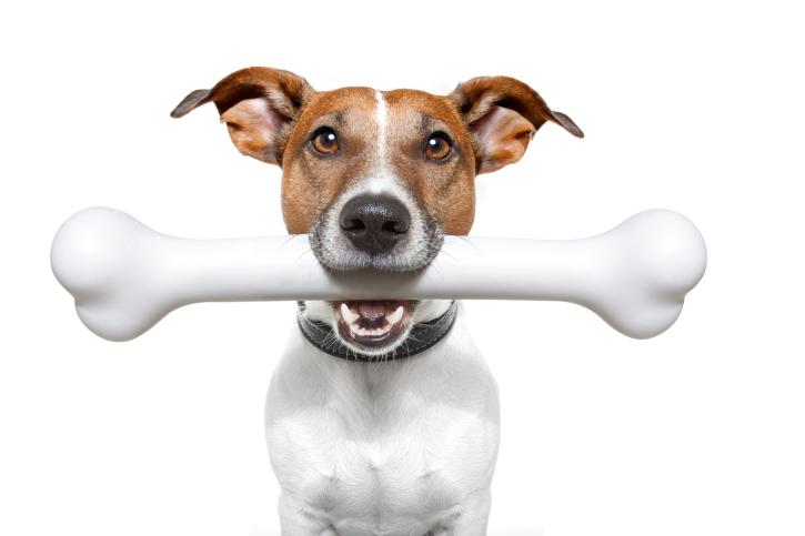 Dare osso cane fa male
