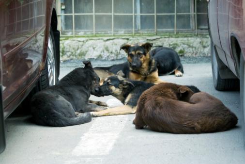 Bocconi avvelenati per cani