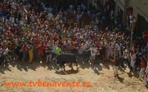 Toro enmaromado 2011