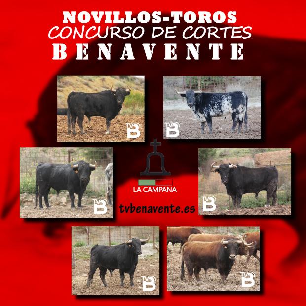 NOVILLOS CONCURSO CORTES 2013