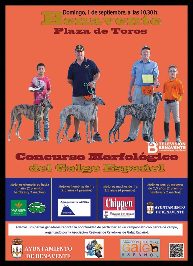 CARTEL galgo 2013 tv