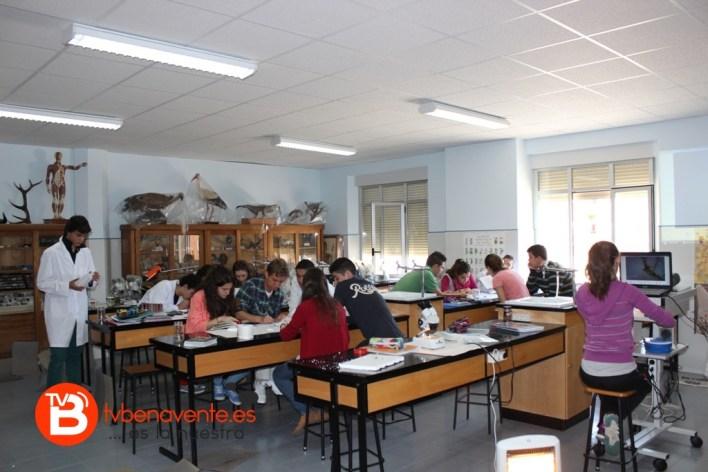 Observando y determinando los macroinvertebrados en el laboratorio
