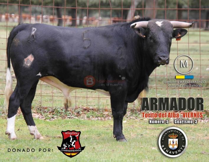ARMADOR - TORITO DEL ALBA BENAVENTE TV