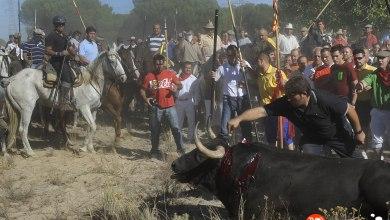 Photo of La Junta de Castilla y León rechaza el permiso administrativo para celebrar el Toro de la Vega