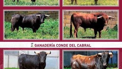 Photo of Toros y Novillos Fiestas del Toro Enmaromado de Benavente 2016