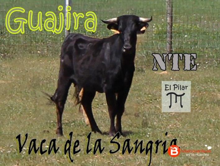 VACA DE LA SANGRIA 2016 - GUAJIRA - NTE - NO TE EMBALES