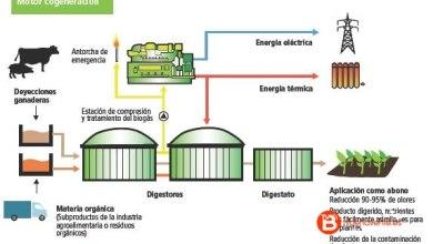 Photo of Unidos Podemos quiere crear plantas de tratamiento de purines o biogás