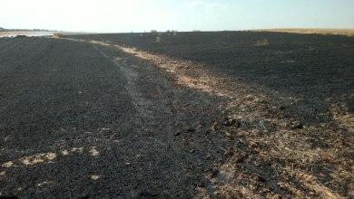Photo of Un incendio arrasa casi cuatro hectáreas de cereal en Matilla de Arzón