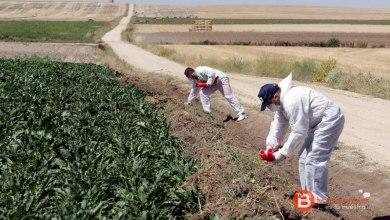 Photo of UCCL considera que las medidas para combatir los topillos llegan tarde