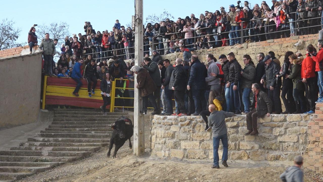 VIDEO: Toro y Vaca de Cajón en Castrogonzalo en honor a San Antón 2017