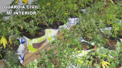 Photo of La Guardia Civil incauta 270 plantas de marihuana y detiene a los autores