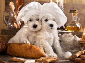 5 alimentos que fazem bem aos pets com a blogueira Mari Castro