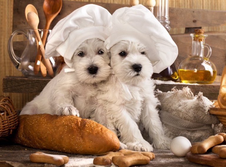 5 alimentos que seu pet vai adorar!!!