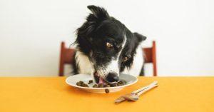 Alimente seu PET com comidas caseiras e sem conservantes com Dr. Marcos Fernandes