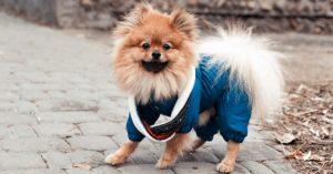 Cuidados no frio e com o ar seco para seu pet por Dra. Elaine Pessuto