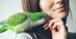 Cuidados necessários com papagaios e araras por Diego Sanchez