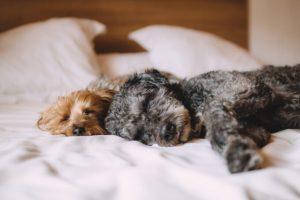 O que fazer para deixar o cão em casa por Luiza Cervenka