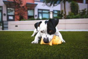 Quais são as necessidades básicas dos cães por Thamires Pacheco