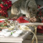 Trophy Wife Episode 10 Twas the Night Before Christmas... Or Twas It? (18)