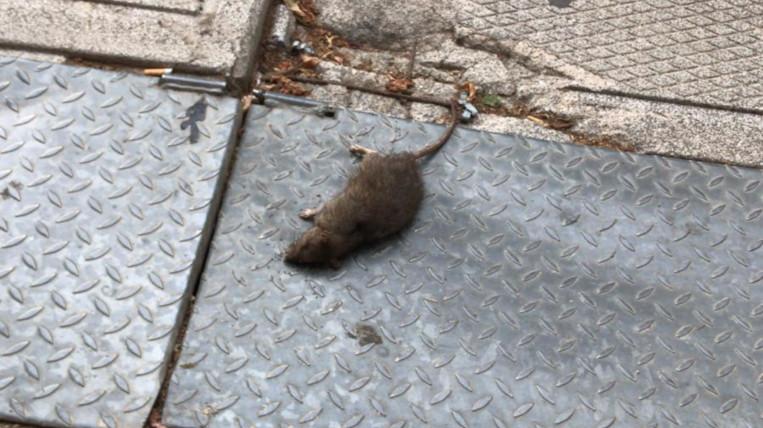 L'ajuntament transmet tranquil·litat davant l'augment de rates a Sant Cugat