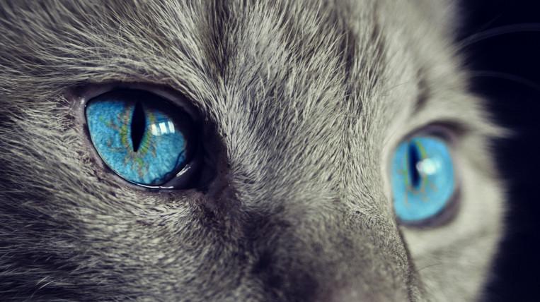 Les colònies de gats de Sant Cugat es continuen alimentant, tot i l'estat d'alarma