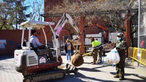 532 arbres han estat plantats a la ciutat durant la campanya 2020-2021