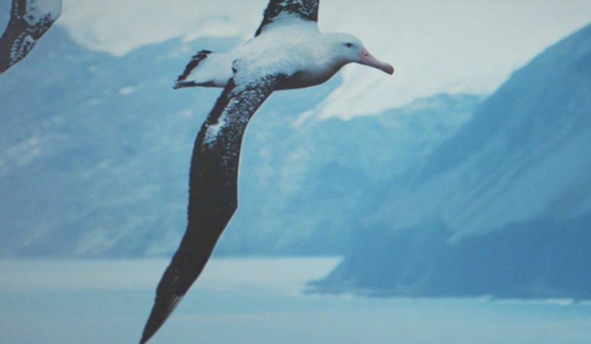 Daydreamer Le ali del sogno significato albatros, qui un fotogramma della puntata 2 Credits Mediaset