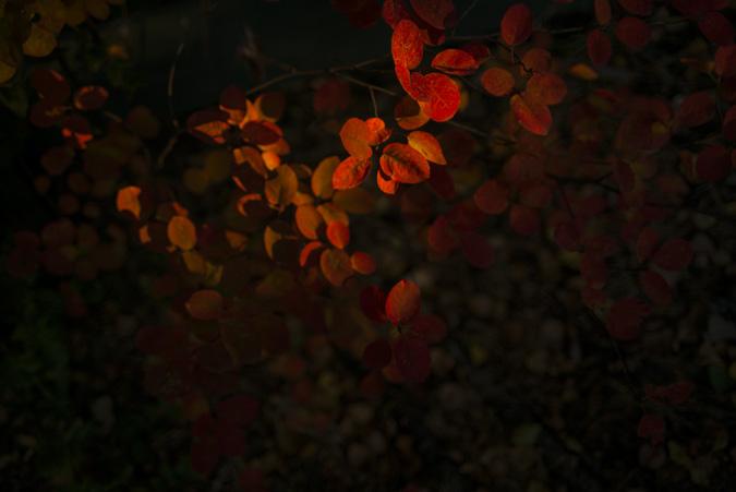 Fotograf_Nicki_Twang_fotokurs_september14_002