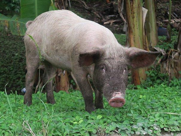 piggy by .
