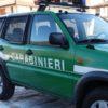 Firenze: gregge di pecore decimato dal freddo e dai lupi. Denunciato il pastore