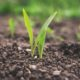AGROALIMENTARE, BANDO PER STARTUP E PMI INNOVATIVE DEL SETTORE