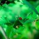 Sostenere lo sviluppo agroecologico, Firenze Bio aderisce a FederBio