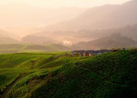 Coltivazioni agricole, calano le superfici destinate a cereali