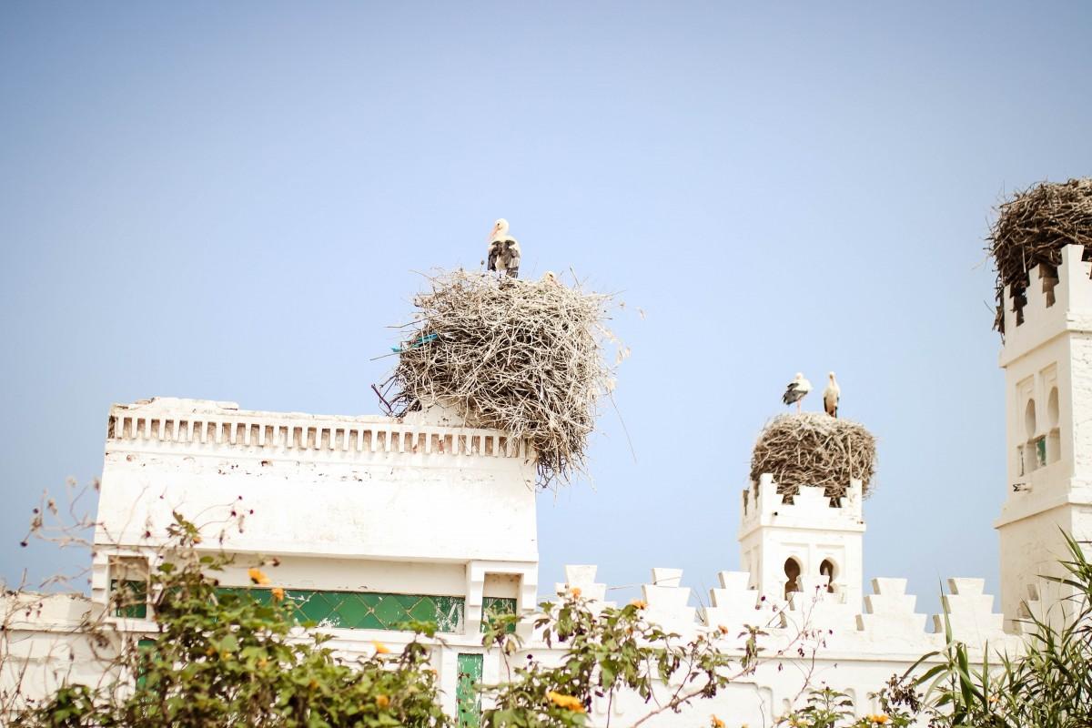 Banyan Tree Tamouda Bay Storks