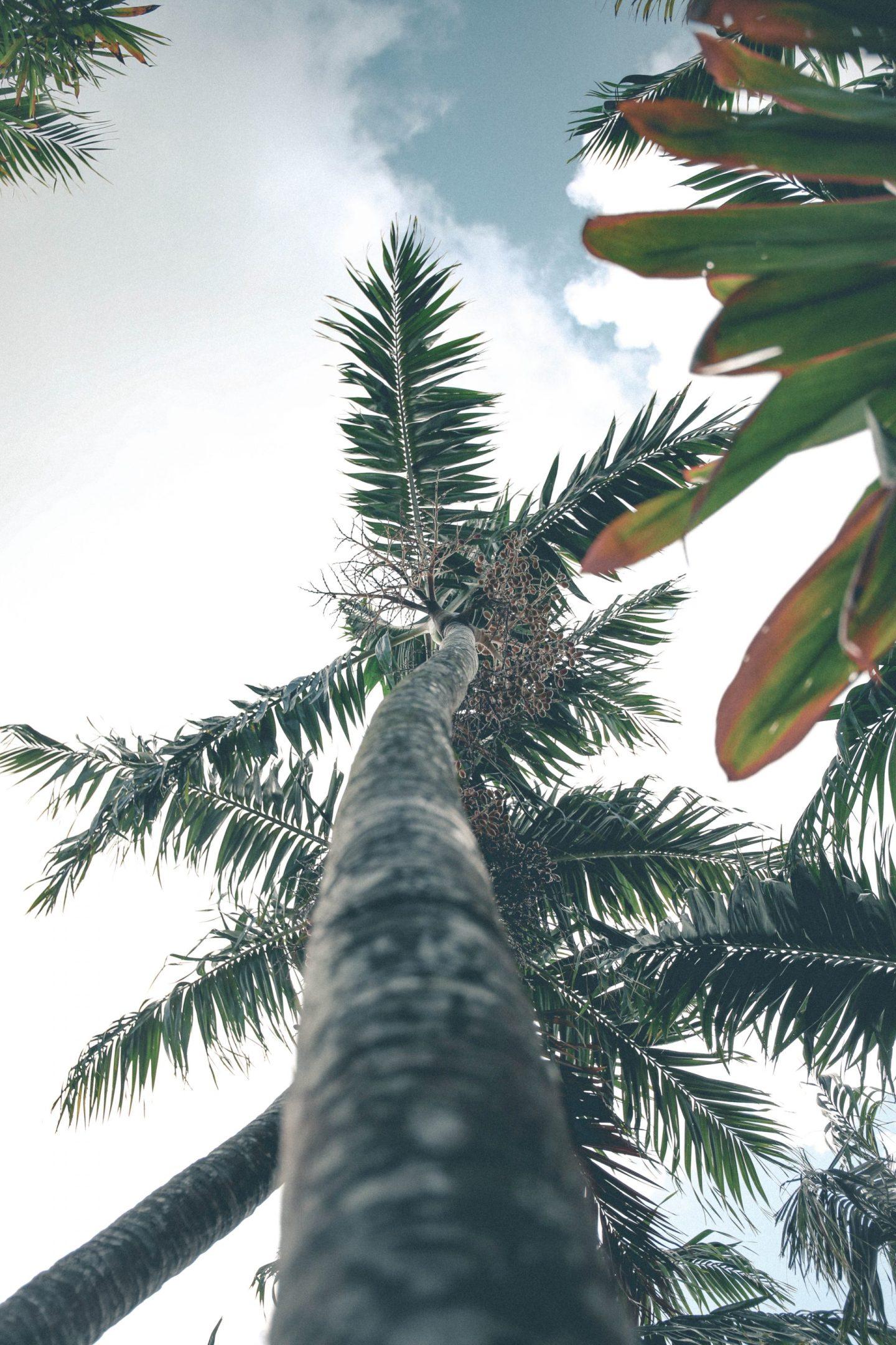 Cayman Islands Botanical Gardens