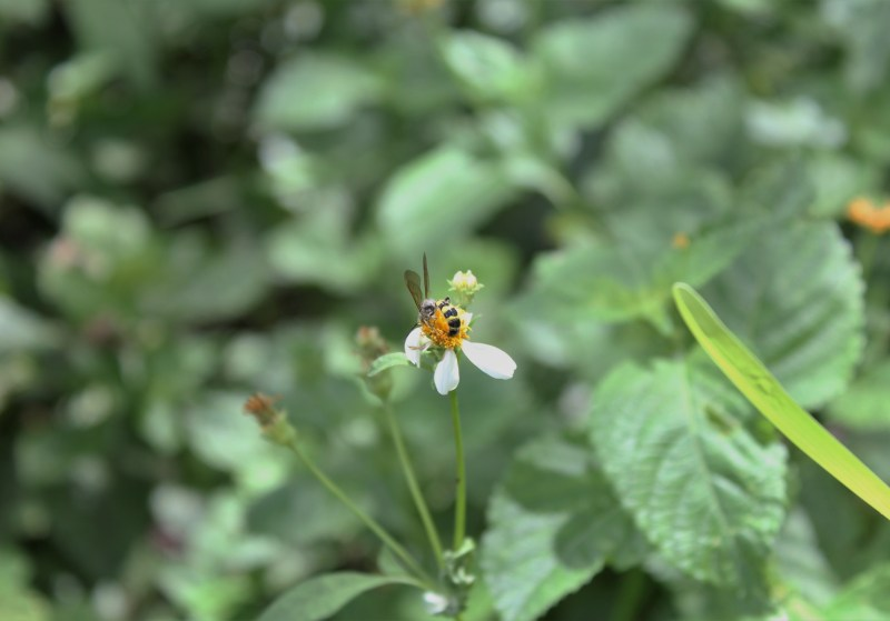 Bee Flower Nectar Twentysomething Vision
