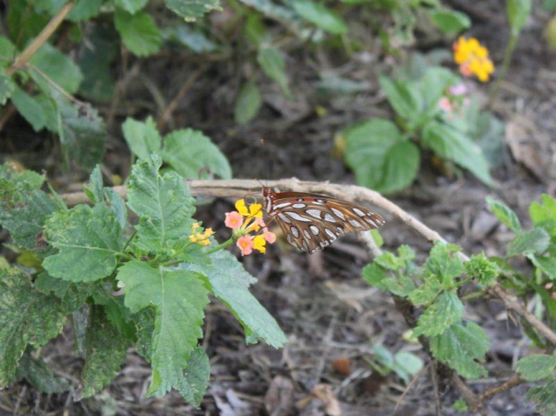 Butterfly Wings in Florida Twentysomething Vision