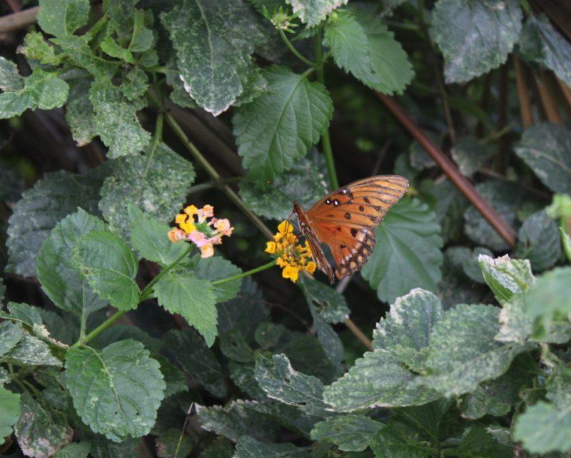 Florida Butterfly Twentysomething Vision